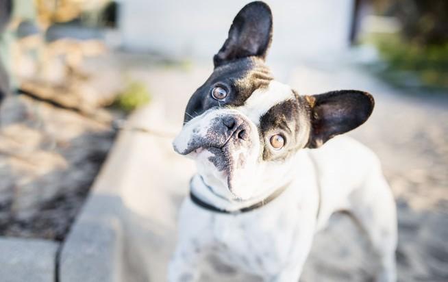Image of: Puppy Dubai Marina Dog Walking Backlash The New Yorker Where To Walk Dogs In Dubai Not In Dubai Marina Whats On