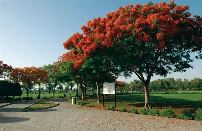 Picnics in Dubai: Safa Park