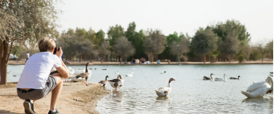 Things to do at Al Qudra Lakes