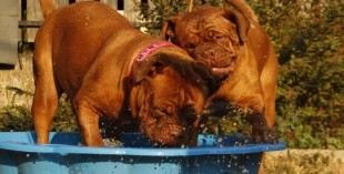dogs in the heat