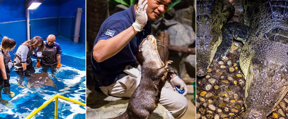 Video New Educational Animal Encounters At Dubai Aquarium