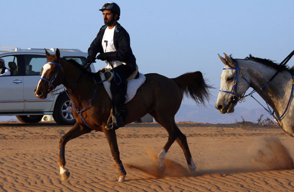 sheikh-mohammed-horse