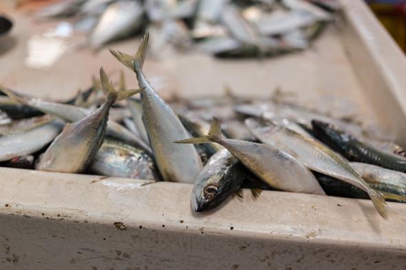 deira-fish-market-17