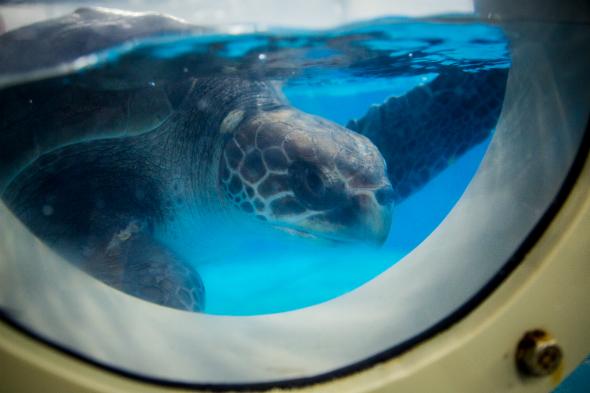 Turtle rehab 1