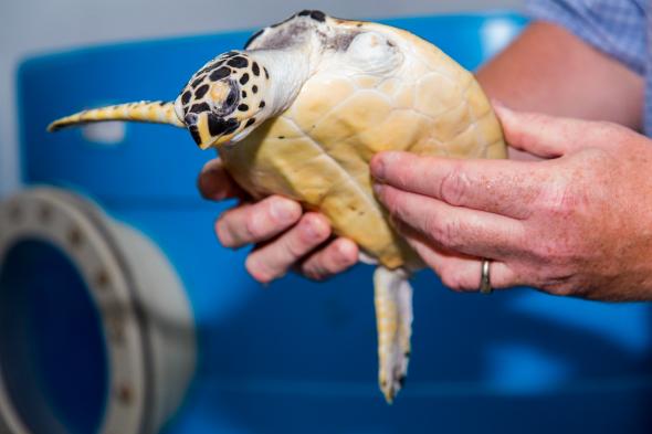 turtle rehab 3