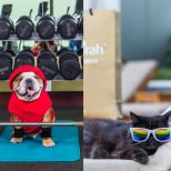 Dubai pets hotel luxury