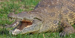 dubai-crocodile-park