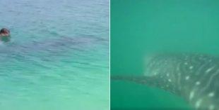 whale shark open beach