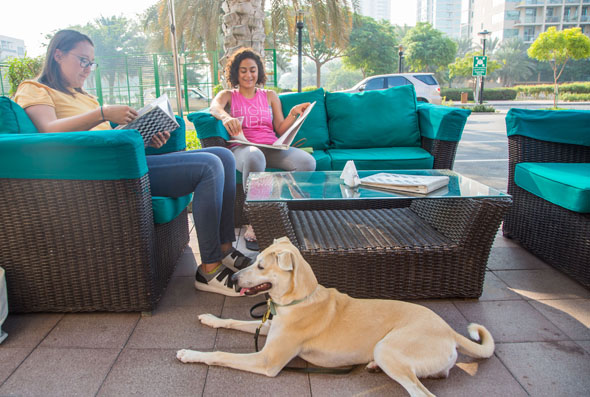 Berts - Pet Friendly Restaurants In Dubai