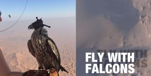 falcons-featured
