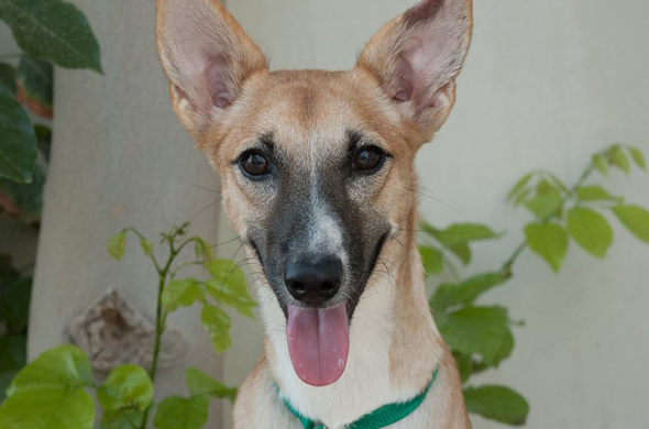 46 Dogs And Puppies That Need Foster Or Forever Homes In