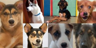 dubai dog adoption