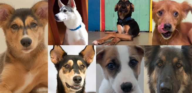 Dogs for Adoption