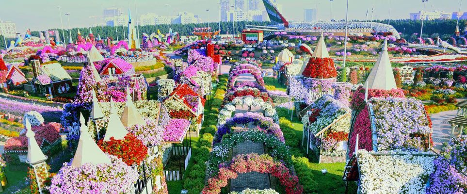 watch inside dubai miracle garden whats on dubai - Dubai Miracle Garden