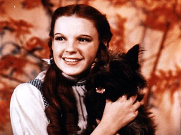 Toto, The Wizard of Oz