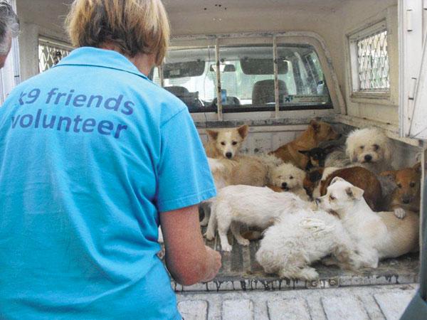 Volunteer in UAE