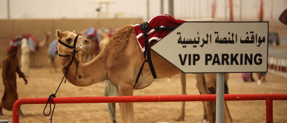 Camel boarding