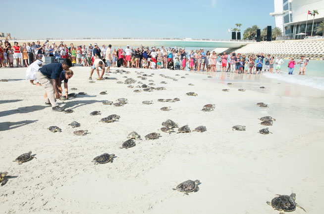 Dubai Turtle Rehab Project at Madinat Jumeirah and Burj Al Arab