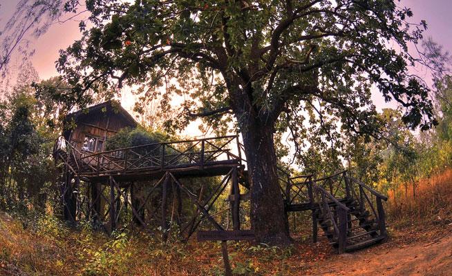Bandhavgarh, India - best treehouse holidays