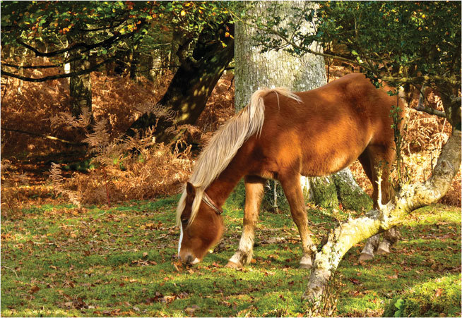 New Forest - world's best horseriding holidays
