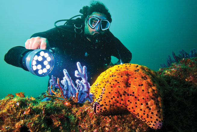 Scubadiving in Oman