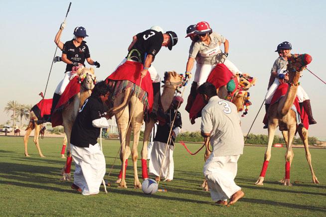 Offbeat sports in Dubai - Camel polo