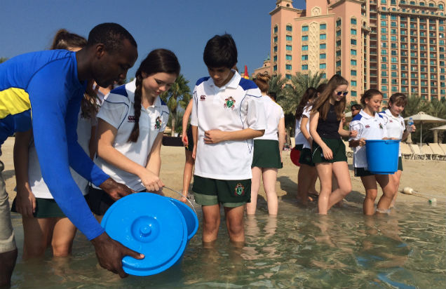 Native fish release at Nasimi Beach, Atlantis, The Palm