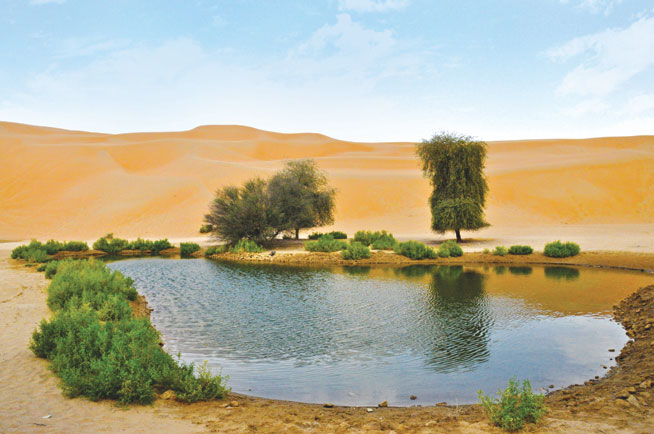 Liwa Oasis - road trips in the UAE