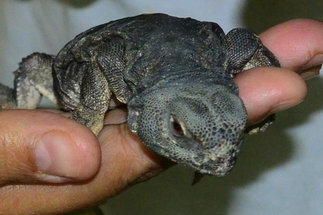 Baby reptiles in Al Ain Zoo