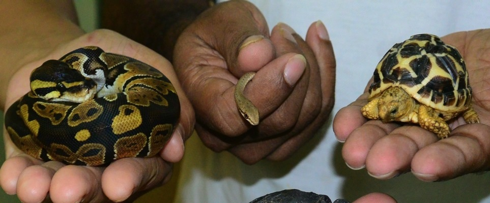 Reptile new-borns in Al Ain Zoo