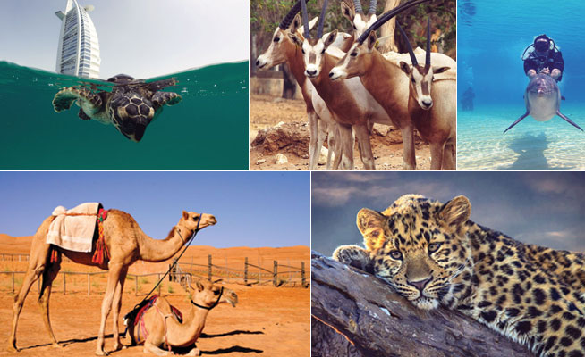 Where to see wild animals in UAE