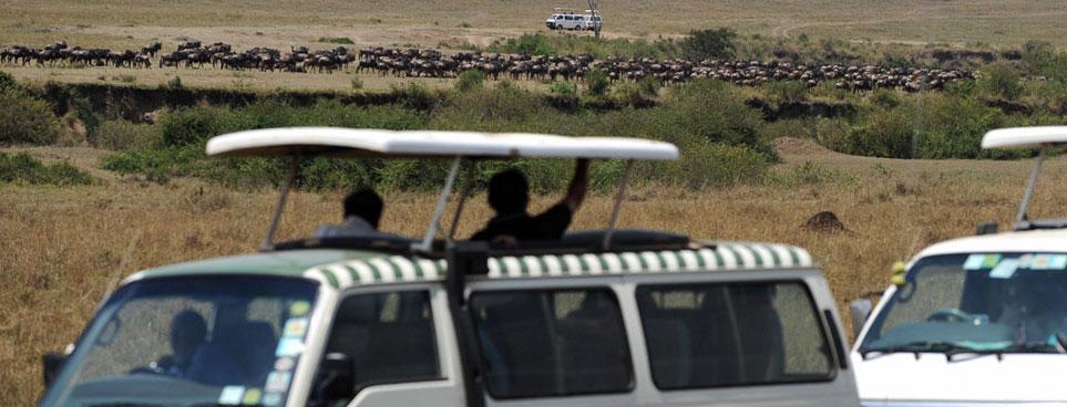 African Safari in Al Ain (stock image)