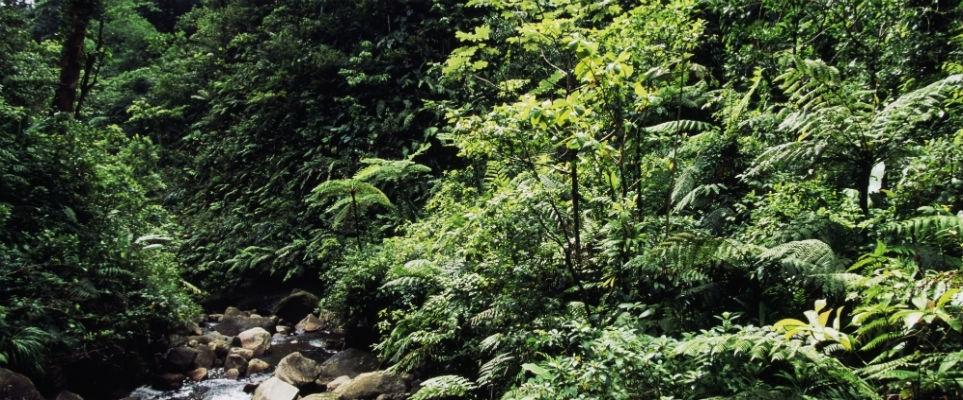 Dubai set to build rainforest
