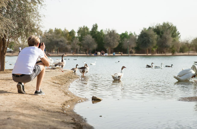Camping in Dubai and the UAE, at Al Qudra Lakes - a complete guide