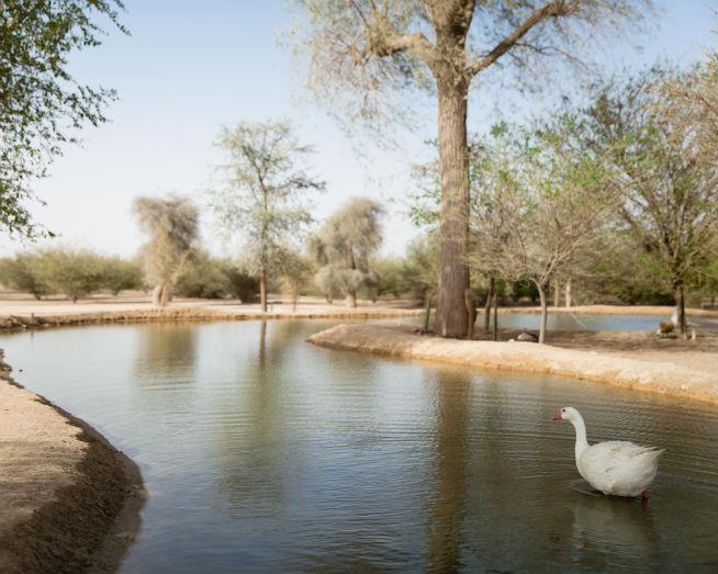 Wildlife spotting at Al Qudra Lakes