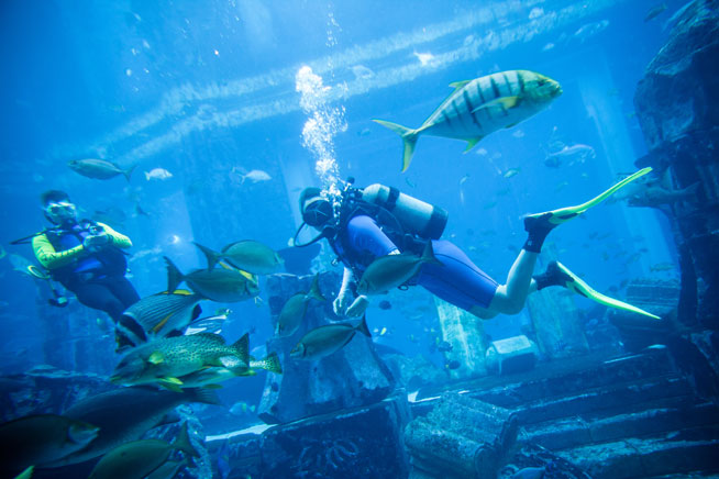 Diving at Atlantis in Dubai