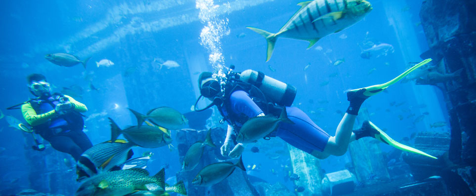 Scuba diving at Lost Chambers, Atlantis The Palm