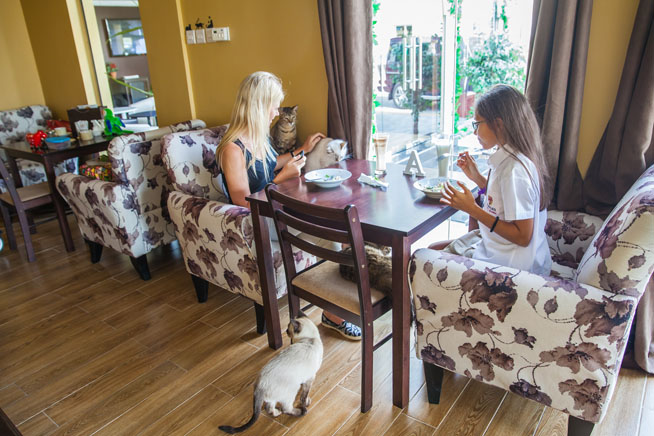 Cat cafe in Dubai - The Ailuromania Cafe - What's On