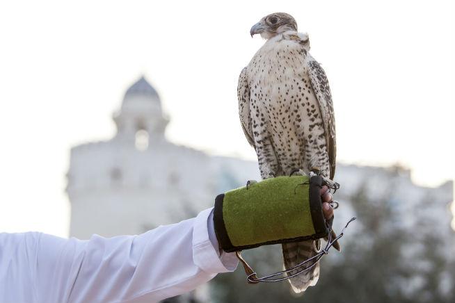 Qasr Al Hosn Falconry