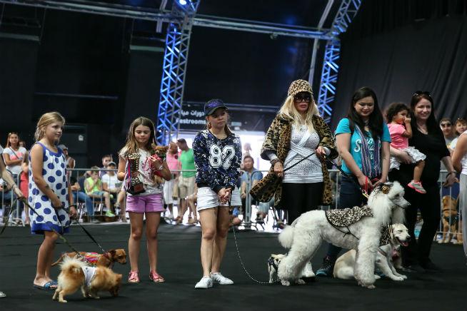 Pet Festival (2)