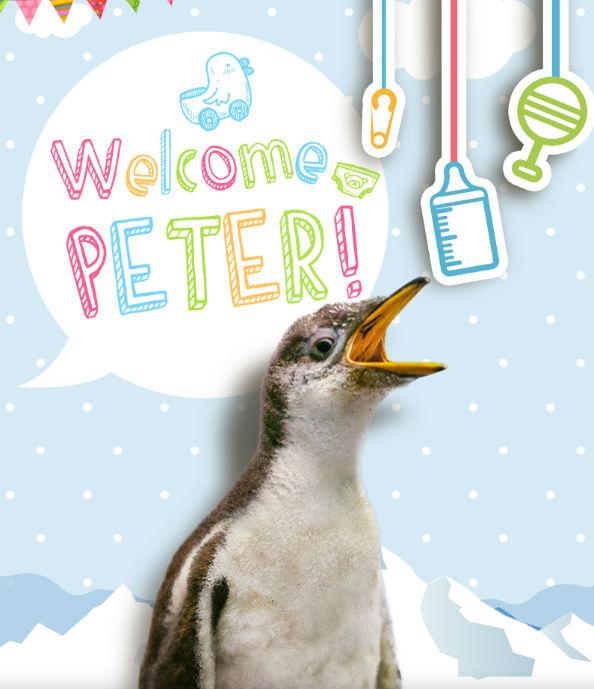 Peter Ski Dubai