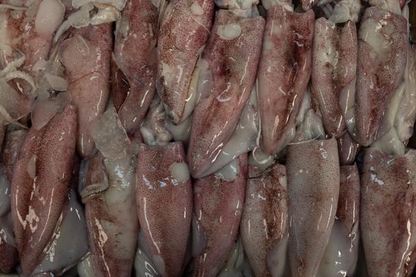 deira-fish-market-11