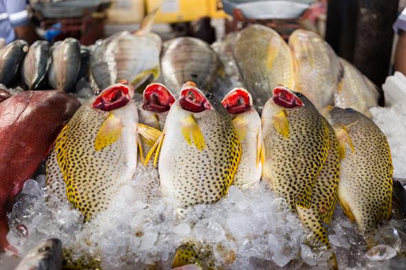 deira-fish-market-4