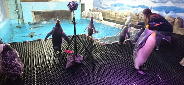 penguins ski dubai