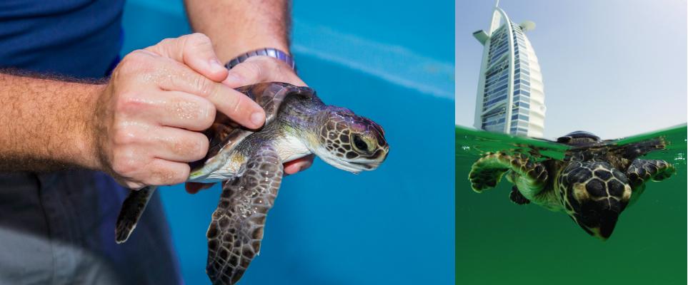 Turtle rehab featured