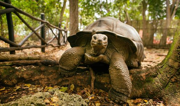 tortoise-zanzibar