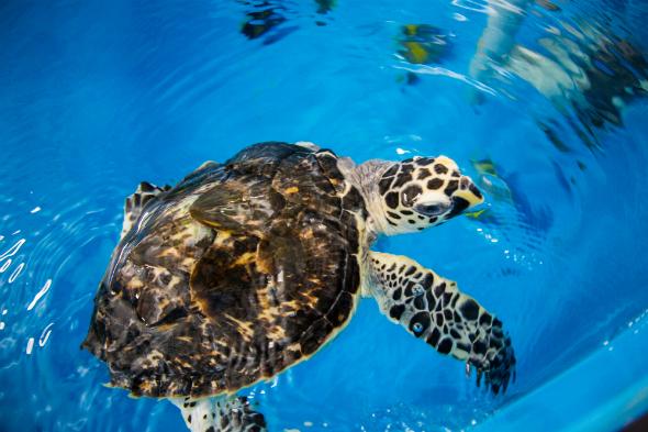 turtle rehab 06