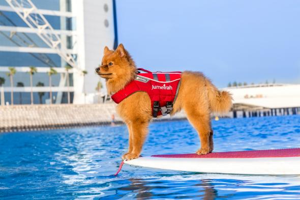 Dog burj paddle board