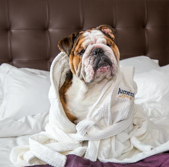 dog hotel bed