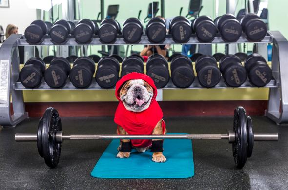 dog pumps iron